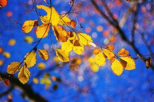 Фото бесплатно листья, осенние цветы, ветка