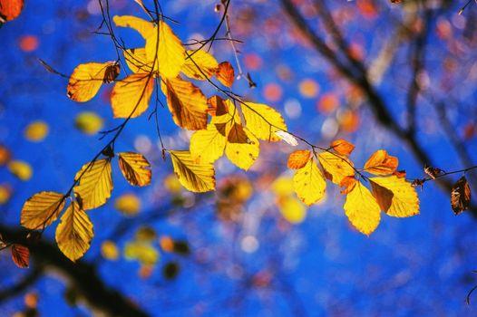 Photo free leaves, autumn colors, branch