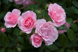 Фото бесплатно цветочная композиция, цветы, розы