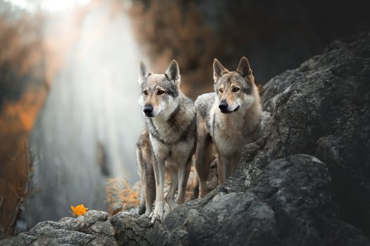 Two dogs at the Falls · free photo