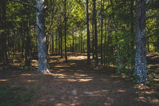 Photo free leaves, path, trees
