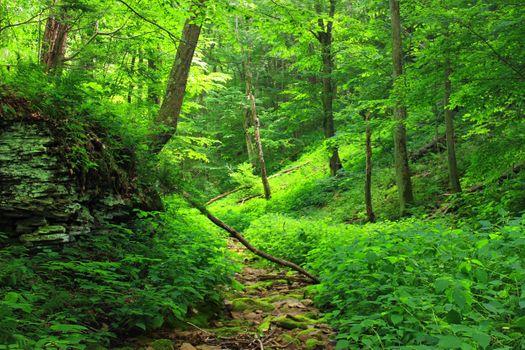 Фото бесплатно лес, ветви, поваленные деревья