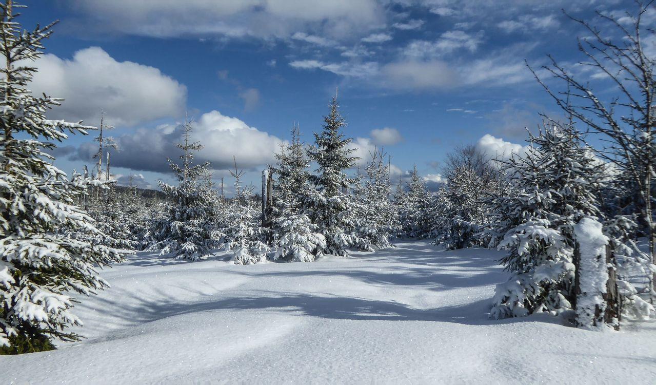 Фото бесплатно зимушка, зима, деревья, ели, снег, сугробы, небо, облака, природа, пейзаж, пейзажи