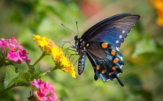 Фото бесплатно бабочка, крылья, цветы