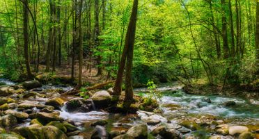 Photo free nature, trees, Great Smoky Mountains National Park