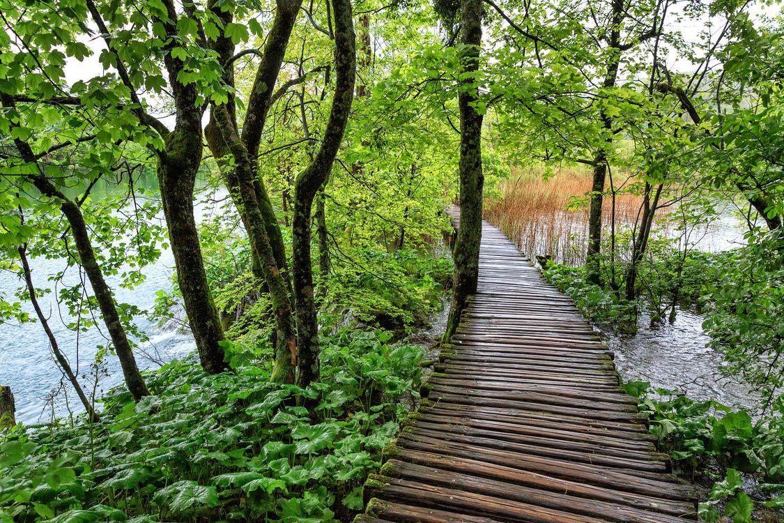 Деревянный мостик через озеро · бесплатное фото