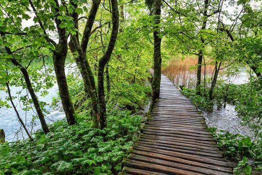 The wooden bridge across the lake
