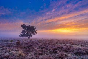 Бесплатные фото поле,лаванда,закат,сумерки,цветы,дерево,туман