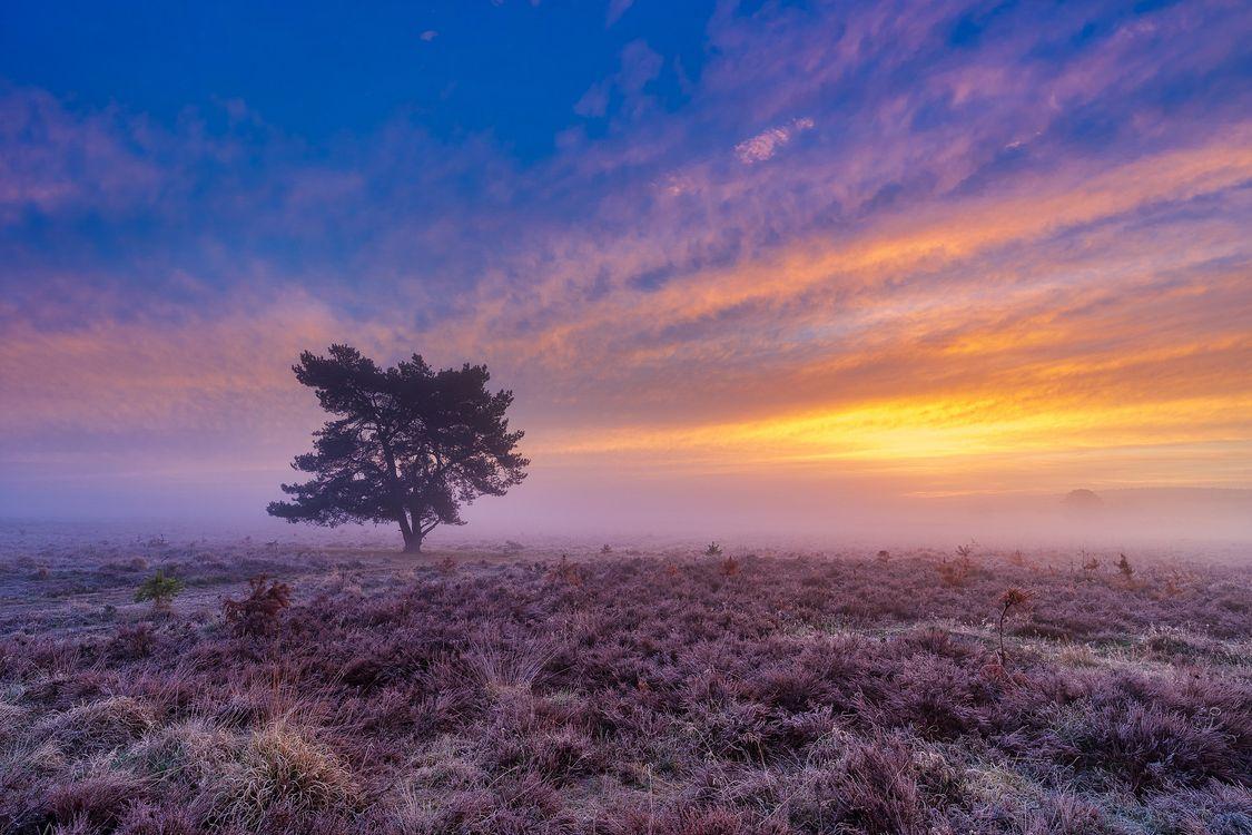 Фото бесплатно небо, туман, цветы - на рабочий стол