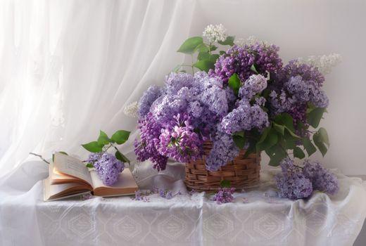 Photo free photo, still life, lilacs