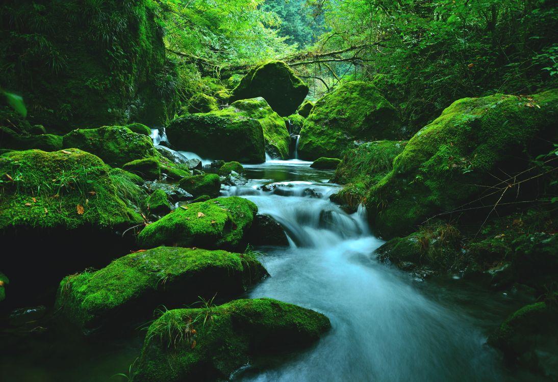 Фото бесплатно водопад, зелёный, лес, камни, речка, деревья, мох, природа, пейзаж, Япония, природа