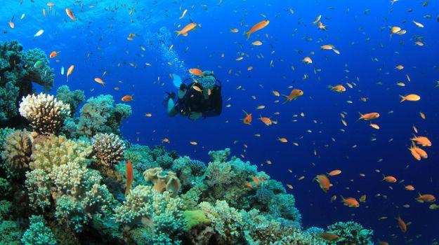 Фото бесплатно дайвер, дайвинг, рыбы