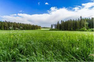 Фото бесплатно небо, трава, лес