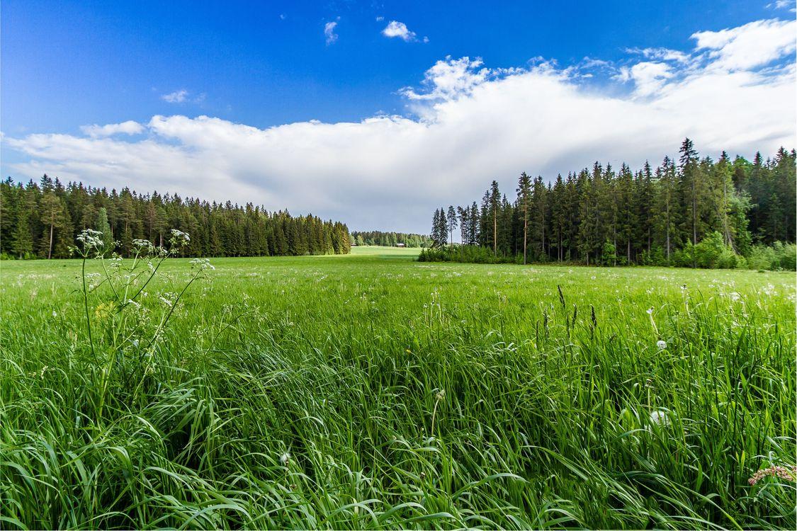 Фото бесплатно небо, трава, лес - на рабочий стол