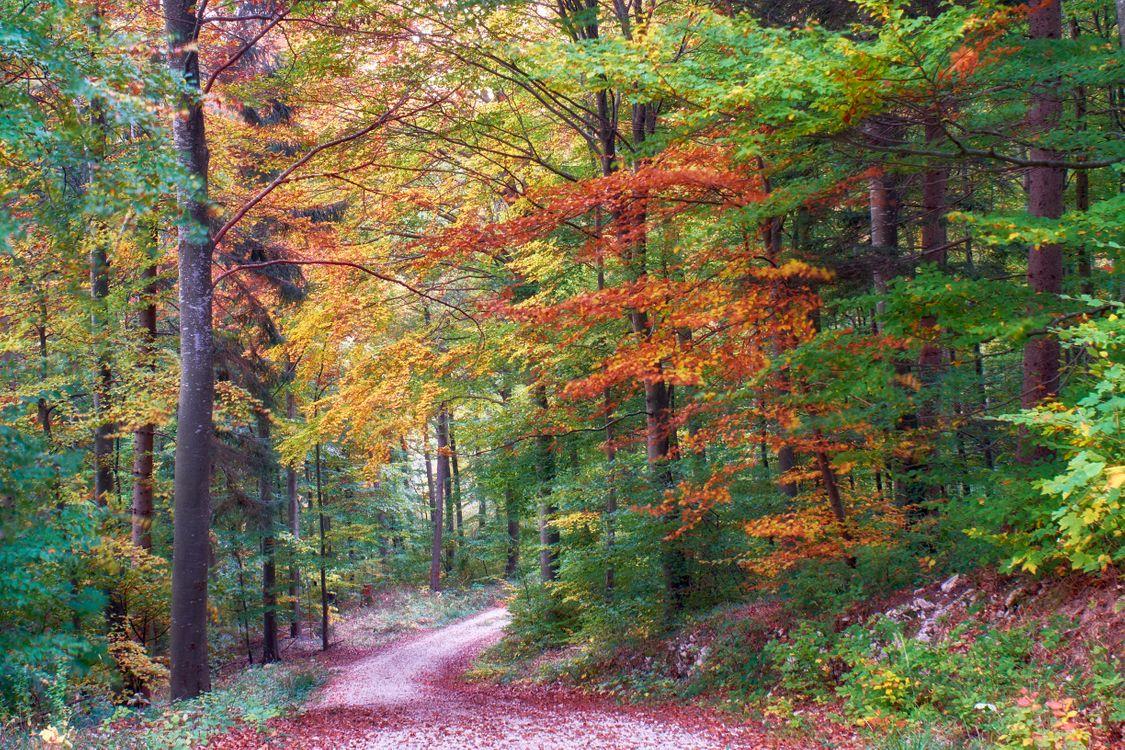 Фото бесплатно осень, лес, деревья, дорога, природа, пейзаж, краски осени, пейзажи