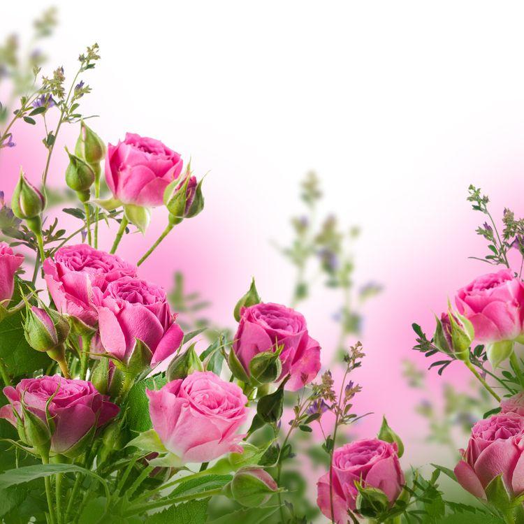 Фото бесплатно розы, букет, композиция из цветов - на рабочий стол
