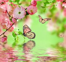 Photo free butterfly, flowers, branch