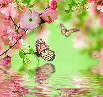 Фото бесплатно отражение, искусство, ветка