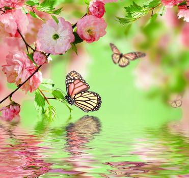 Бесплатные фото бабочка,цветы,ветка,сакура,цветение,отражение,вода,art