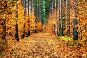 Бесплатные фото осень,лес,деревья,дорога,природа,пейзаж,осенние краски