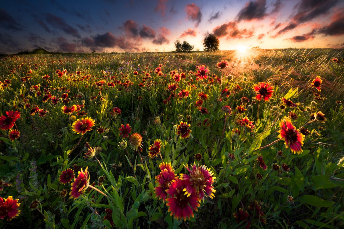 Flowers in the sun · free photo
