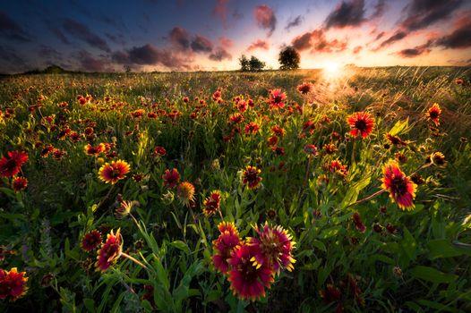 Цветы в лучах солнца