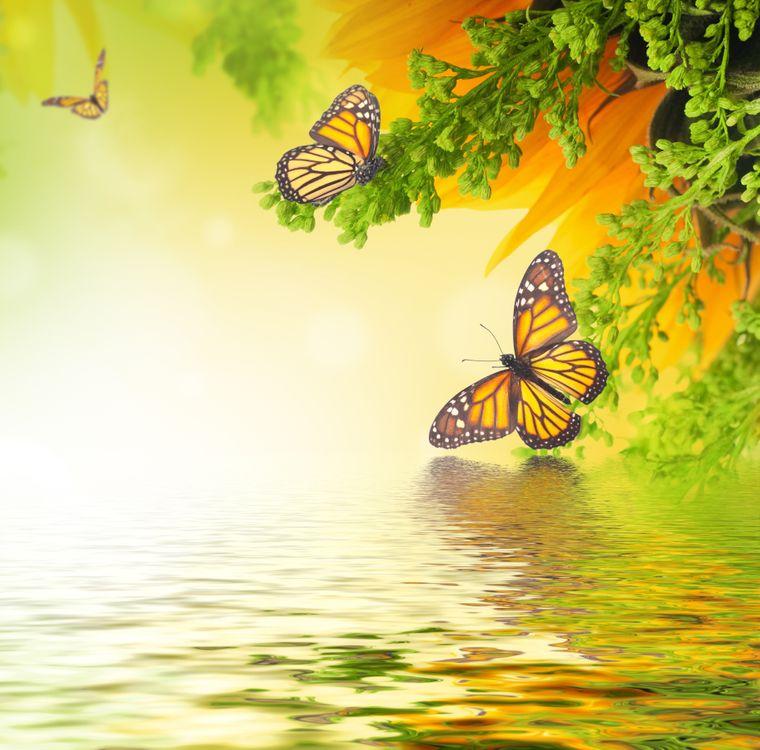 Обои бабочки, водоём, насекомые, растения на телефон | картинки насекомые