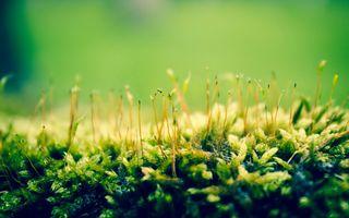 Бесплатные фото трава,зеленая,природа,растения,макро