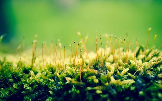 Заставки растения, зеленый, природа