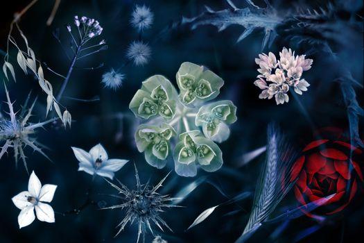 Заставки природа, манипуляции, растения