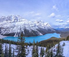 Photo free forest, Lake Peyto, lake