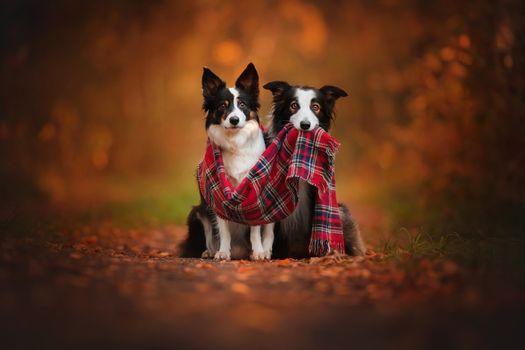 Autumn duo · free photo