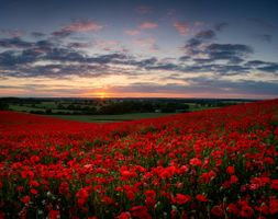 Маковое поле на закате