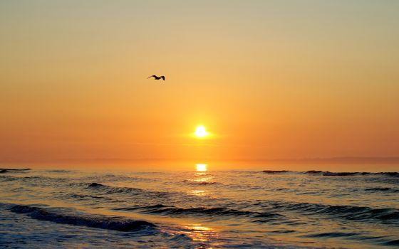 Чайка над океаном на закате