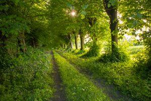 Фото бесплатно деревья, лето, пейзаж