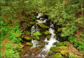 Посмотреть фото речка, лес, деревья