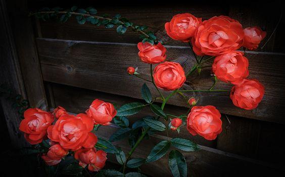 Какие красивые цветы