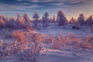 Снежный лес · бесплатное фото