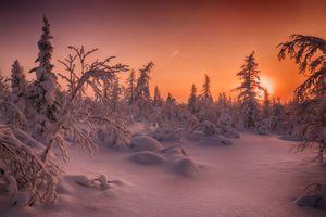 Фото бесплатно лесотундра, закат, пейзаж
