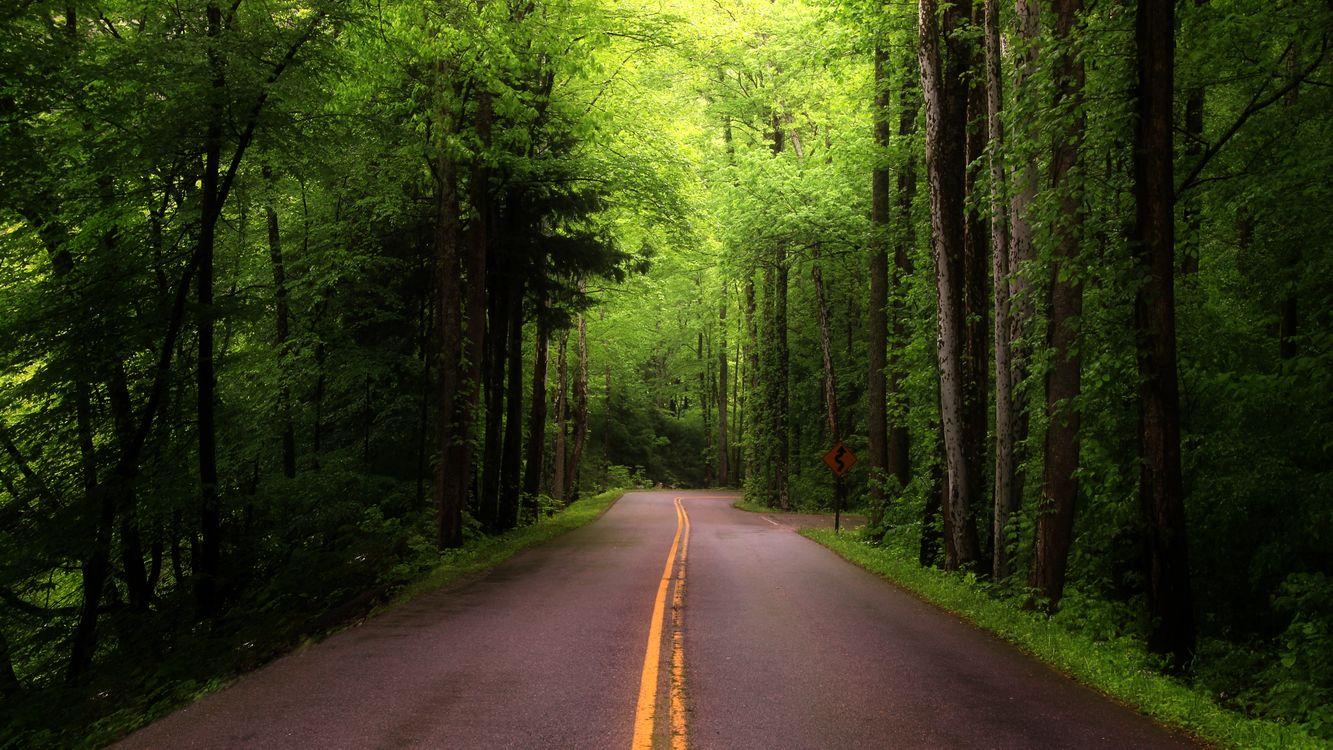 отца убивают обои на телефон дорога в лесу продаже загородных домов
