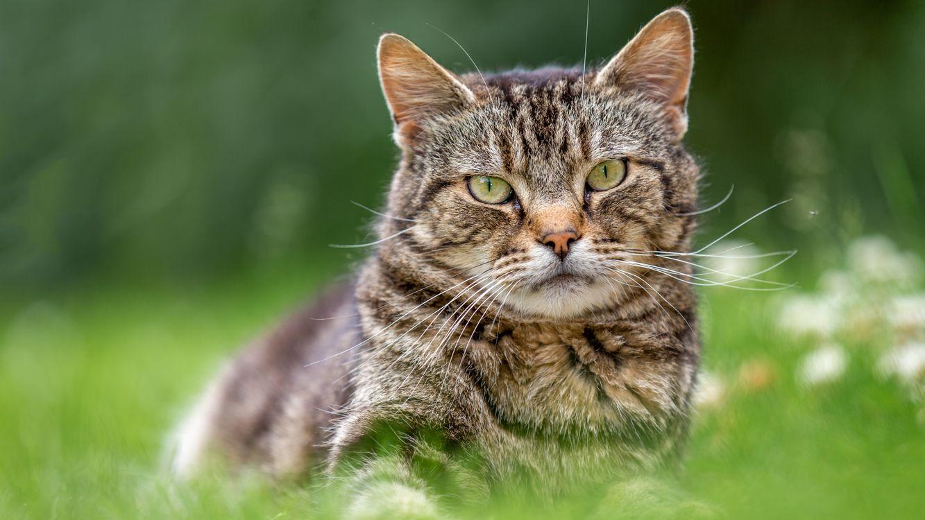 Серый полосатый кот · бесплатное фото