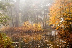Фото бесплатно осень, осень цвета, мост