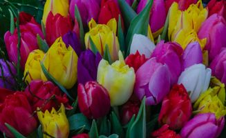 Фото бесплатно букет, разноцветные, тюльпаны
