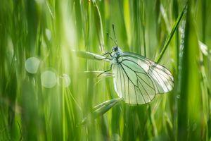 Фото бесплатно бабочка, насекомое, трава, природа, макро