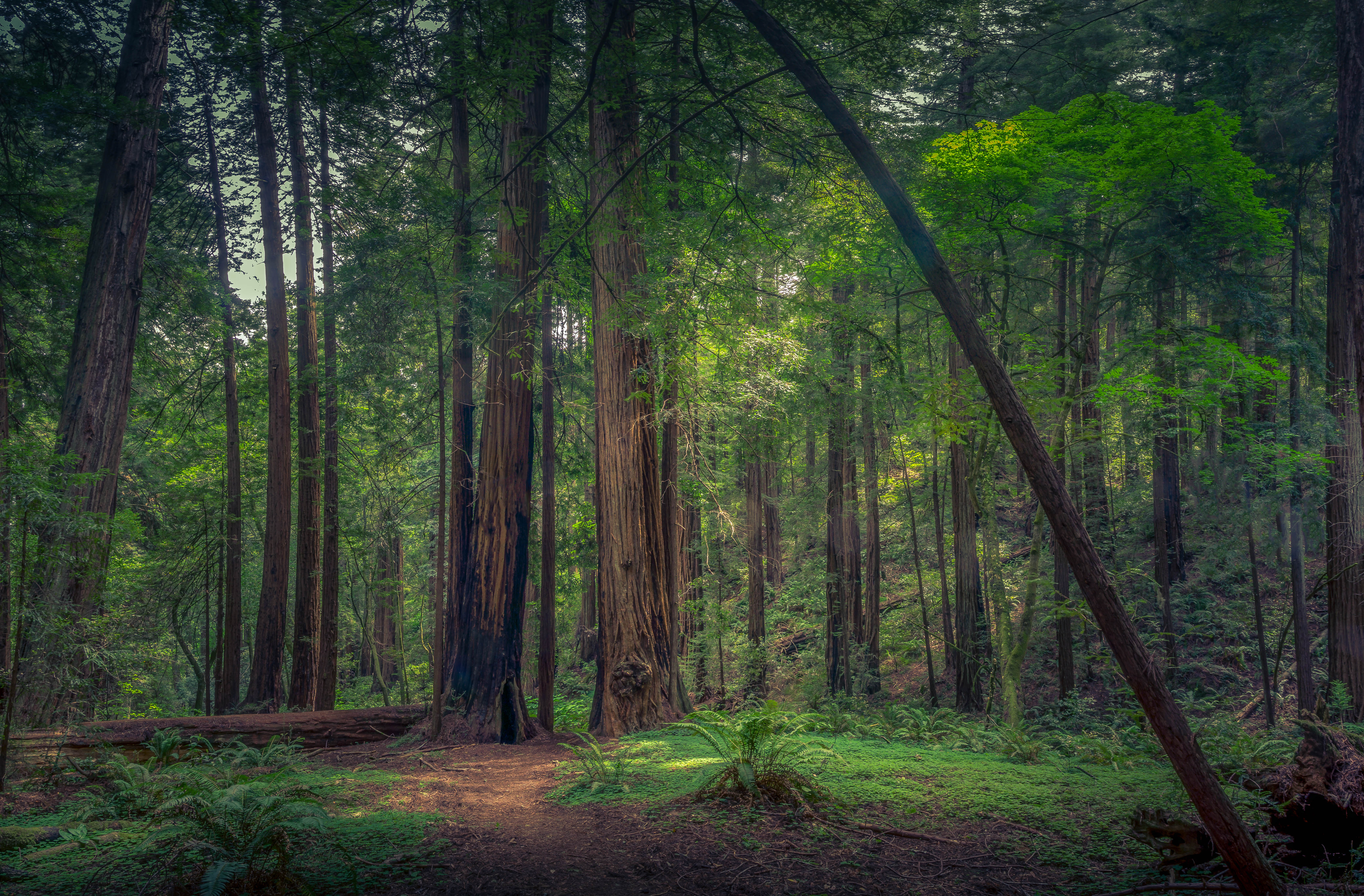 сторис фото леса для смартфона прессе среди