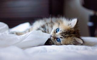 Котенок на кровати · бесплатное фото