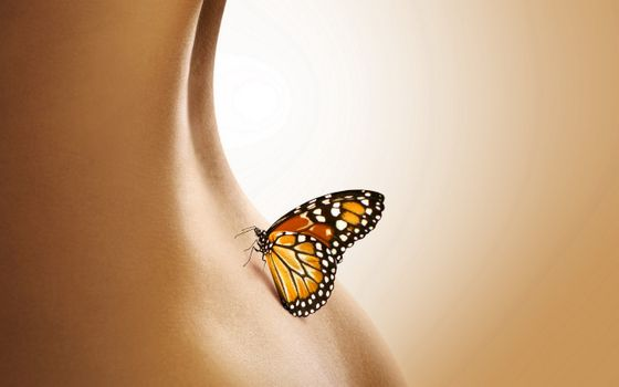 Butterfly on ass · free photo