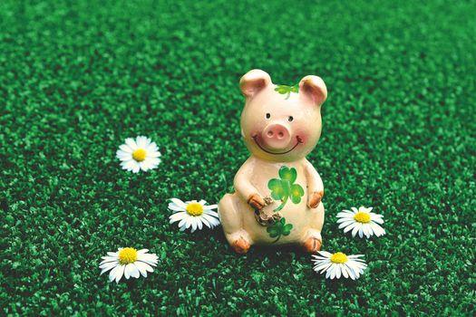 Фото бесплатно символ года свиньи, привет Q, свинья