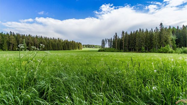 Фото бесплатно поле, деревья, цветы, осока, лес, трава, луг, солнечный