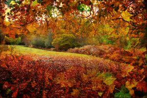 Заставки осень, поле, деревья